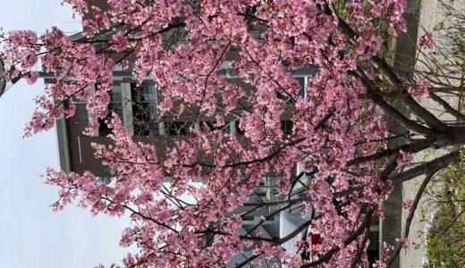 ◆桜の季節に楽しめる粋な紳士ファッション◆
