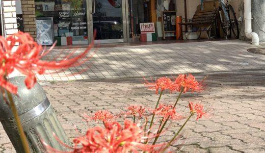 ◆店先に佇む綺麗な彼岸花&究極ミラノ仕立てとともに◆