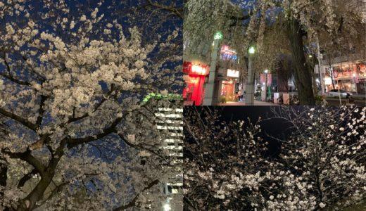 ◆満開の夜桜見物にはイタリアン紳士スタイルが粋◆
