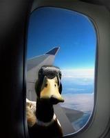 飛行機のぞくガチョウ